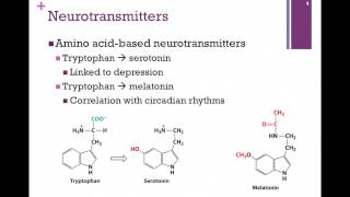 138-Synthesis of Neurotransmitters
