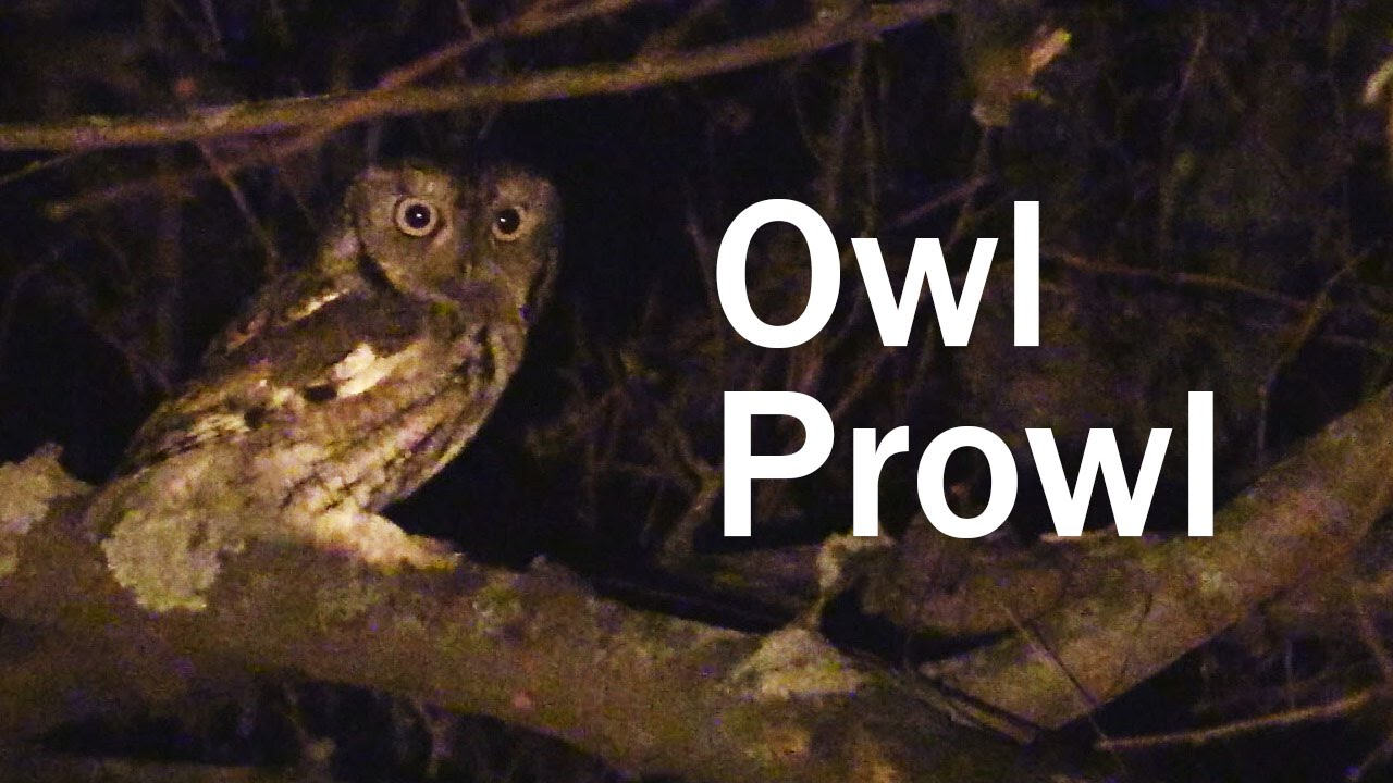 The Owl Prowl