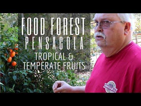 A Fantasia of Fruits in This Garden & Grove Tour (North Florida)