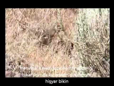 Wild Life -  Rebhuhn, Keklik ( Kurdistan )