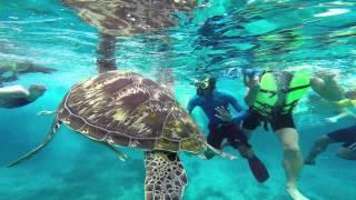 Snorkeling in Similan Islands