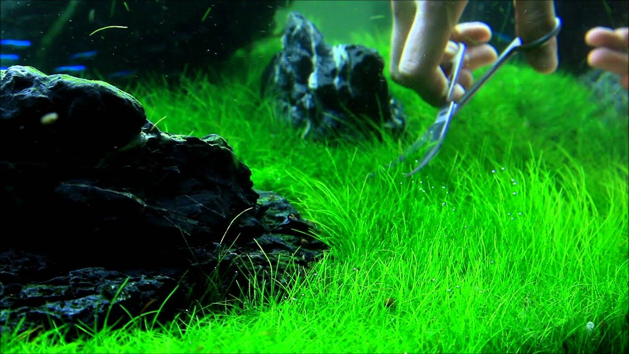 Attractive Just Aquascaping   Flowgrow Aquascaping Tools   Preview