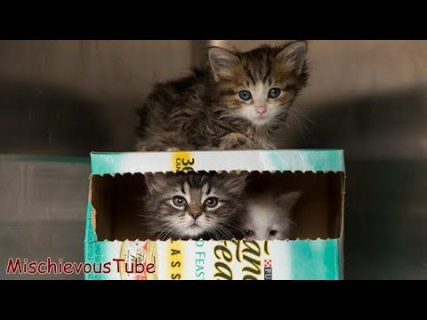 Funny Cat and Cute Kittens Compilation | Try Not to Laugh or Grin - Funniest Animal Videos