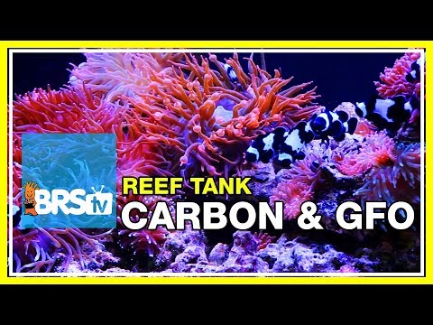 Week 24: Carbon, GFO & filter media for a clean, stable reef