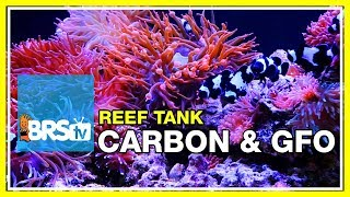 Week 24: Carbon, GFO & filter media for a clean, stable reef tank | 52 Weeks of Reefing #BRS160 thumbnail