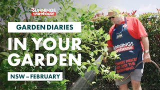 Gardening in February | New South Wales | Bunnings Garden Diary