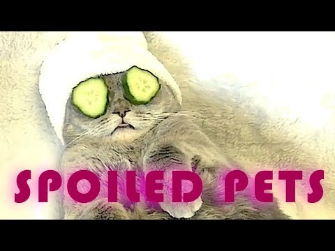 Spoiled Pets || Funny Animal Videos