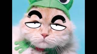 Новое видео смешные кошки!!!