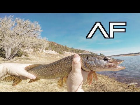 ARIZONA FISHING FOR PIKE AND TROUT!!! LOWER LAKE MARY!!!