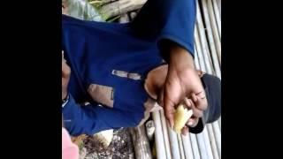 Maluku tenggara. banda ely