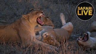 safariLIVE - Sunset Safari - October 12, 2018 - Part 2 thumbnail