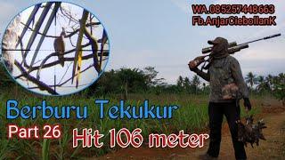 Video Berburu Tekukur#26 Hit 106 meter download MP3, 3GP, MP4, WEBM, AVI, FLV Oktober 2018