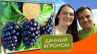 Смородина Крыжовник и другие ягодники: 3 важных вопроса #дачныйагроном