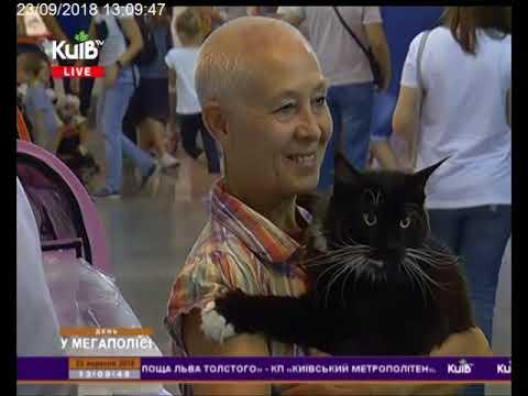Телеканал Київ: 23.09.18 День у мегаполісі