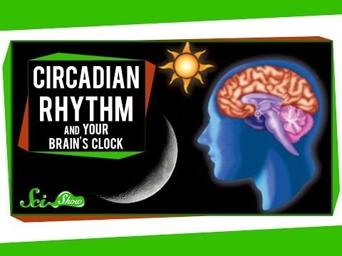 Circadian Rhythm and Your Brain's Clock