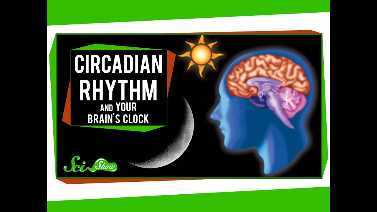 Light at night can disrupt circadian rhythms in children  are there long-term risks?