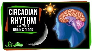 Circadian Rhythm and Your Brain