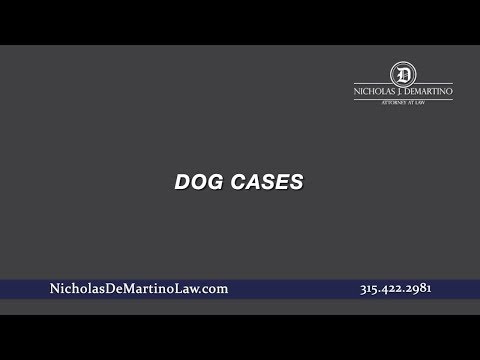 Video: Dog Cases