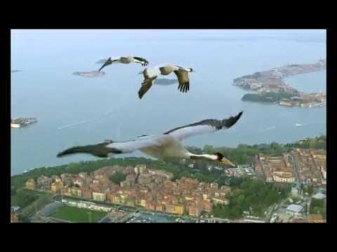 Music video Жека - Журавли