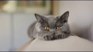 Смешные коты и кошки. Говорящий сфинкс.