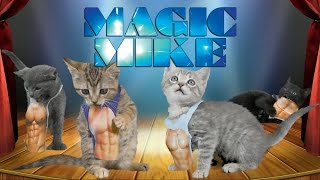 Magic Mike XXL (Cute Kitten Edition)