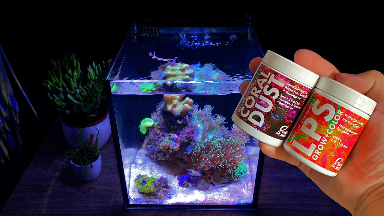 What do Corals eat? Feeding Coral in Reef Tank.