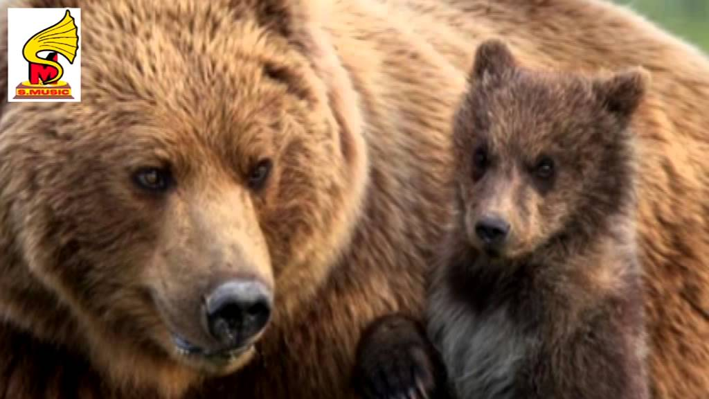 Scary Bear Growling SOUND EFFECT Animal Sounds = animal Sound for ...