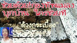 แมลงปีกแข็งแมลงดำแมลงด้วงกระเบื้องบุกบ้านสวนทำไงดี/or-chan