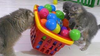 ПРАНКИ НАД КОТАМИ. Кошка Матильда и котята Мурка и Мурчик розыграны