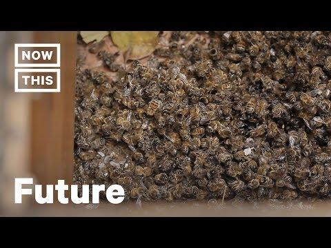 巴西5亿多只蜜蜂3个月内死亡 令人细思极恐
