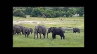 Przygoda w Afryce - słonie | Adventure in Africa - elephants