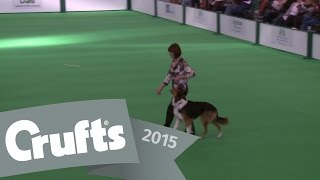 Dog Obedience Championships - Part 8 | Crufts 2015
