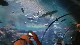 Shark Reef in vegas