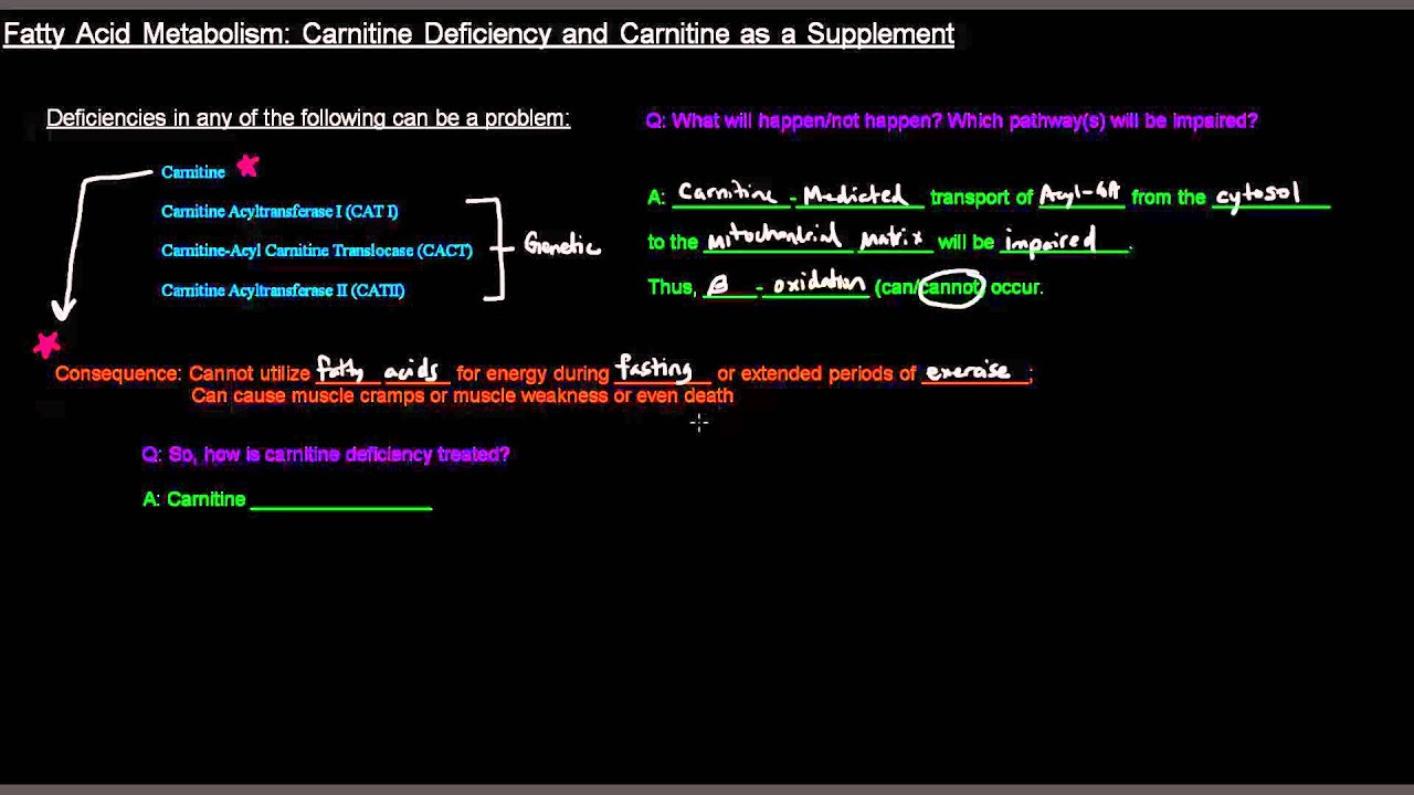 Brain Carnitine Deficiency Causes >> Fatty Acid Metabolism Part 4 Of 8 Carnitine Deficiency And