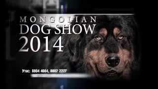 Mongolian Dog Show 2014