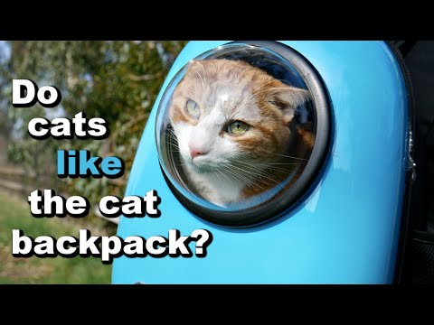 My Cats Review The Cat Backpack (aka The Space Capsule Carrier) 🐱🎒