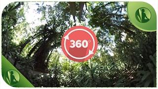 360º Floresta Sons Da Natureza Passaros Cantando E Árvores Em 360 Graus