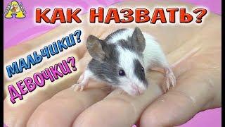 КАК НАЗВАТЬ МЫШАТ LOL pets? / КАК ОПРЕДЕЛИТЬ ПОЛ Японских мышат ЛОЛ? / Алиса Изи