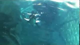旭山動物園は開園50周年を迎えました。 動物のありのままの行動を独自の...