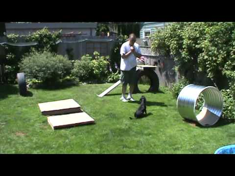 Rat Terrier Cross, Backyard Obstacle Course - Rat Terrier Cross, Backyard Obstacle Course - YouTube