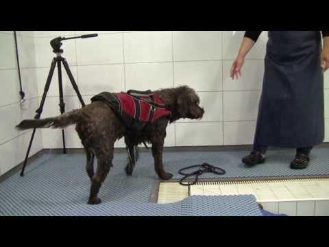 Jaska koira uimakoulussa - Jaska dog in swimming school