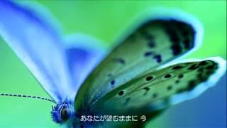 蝶 / 柴田淳 Jun Shibata〈ピアノ弾き語り〉Covered by Nontan