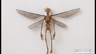 What you need to know about Flying Fairy Demon Creatures You won