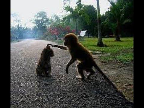 可愛すぎて困ってしまう。猫と猿の出会い