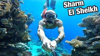 СНОРКЛИНГ В ЗИМНЕМ ШАРМ ЭЛЬ ШЕЙХЕ Риф отеля Reef Oasis Blue Bay Resort Египет