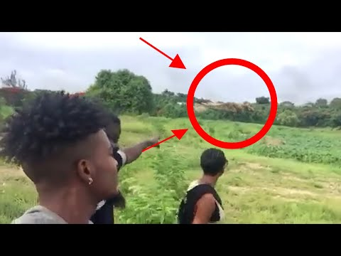 Real T Rex Dinosaur Caught On Camera 2018 in Alive Dinosaurs in Barbados Spotted In Real Life