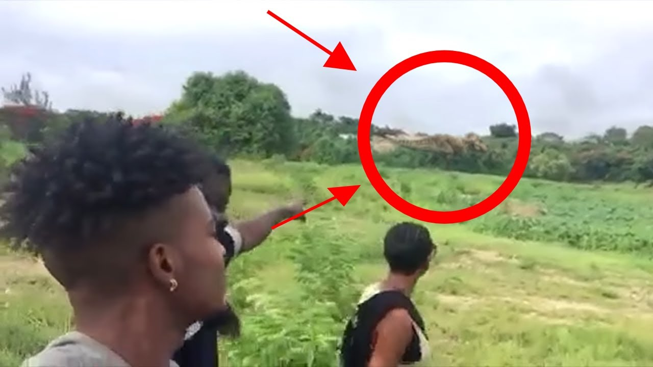 Real T Rex Dinosaur Caught On Camera In Alive Dinosaurs Barbados Spotted Life