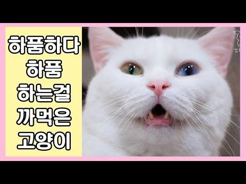 하품하다 하품하는걸 까먹은 고양이 😍 예뻐죽음