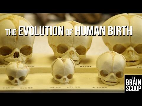 the-evolution-of-human-birth