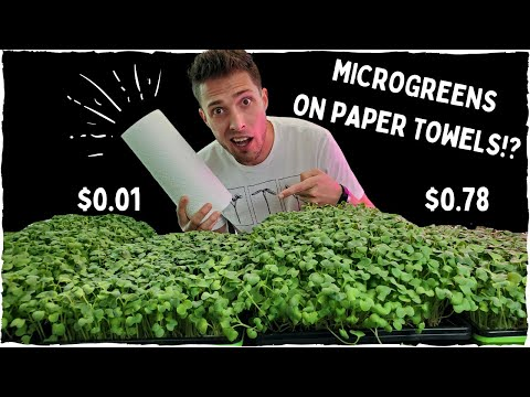 Growing Microgreens on Paper Towels!? - Coco Coir vs Paper Towel